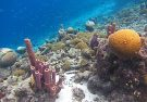 Tall Sponges & Corals
