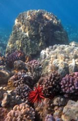Find the healthiest coral reefs on Maui.