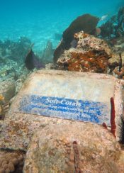 One of the underwater trail plaques we found
