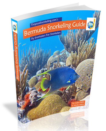 Bermuda Snorkeling Guide eBook