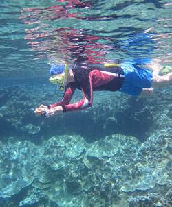 Snorkeler Taking Pictures - Big Island