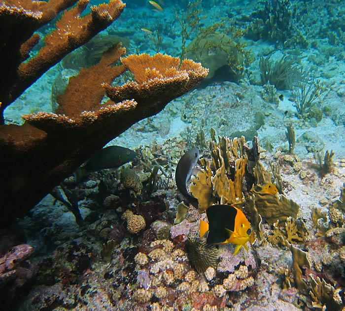 Aruba Snorkeling - Healthy Reef & Fish