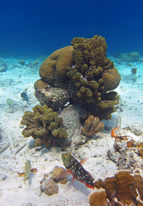 Sponge And Coral Patch