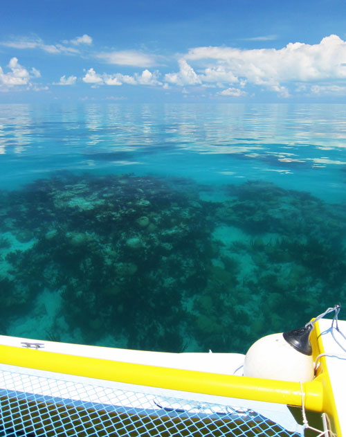 Calm Day At The Outer Reef