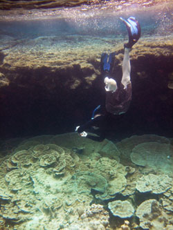 Plate Corals and Snorkeling photographer at Kapoho Tide Pools
