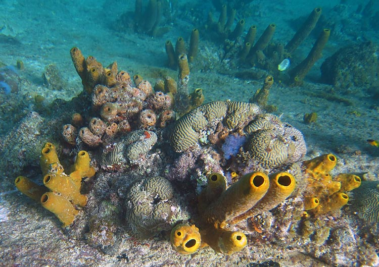 Corals & Sponges Encrusting The Hull