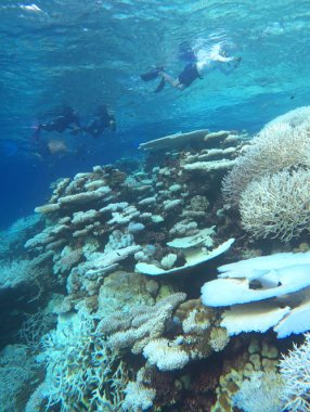 Hard coral makes up most of the reefs in the Maldives. The bleaching is noticeable in this photo.