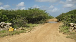 Dirt Road To The Shoreline