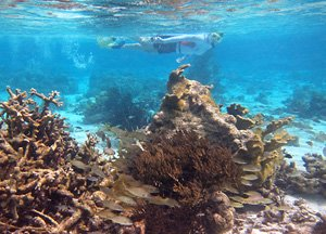 Snorkeling with coral and fish