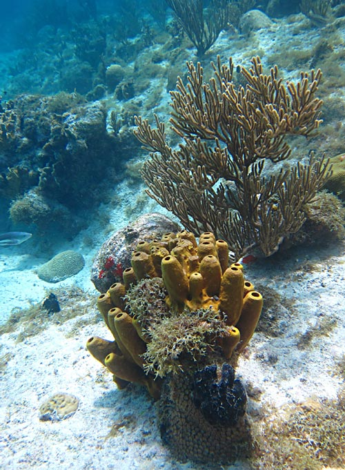 Nice soft corals and sponges