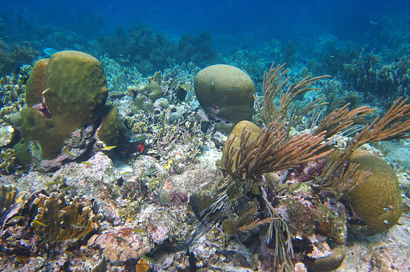More Great Corals