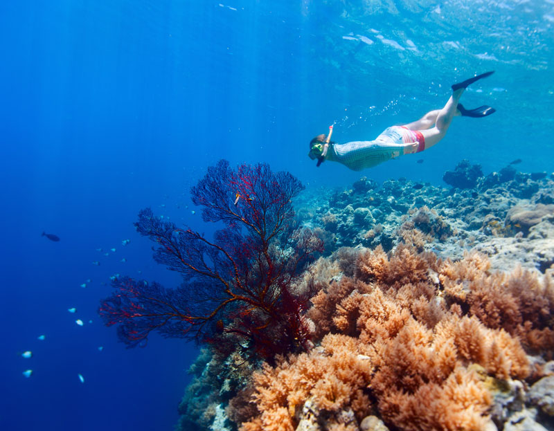 Explore abundant reefs with over 500 coral species and 1500 fish species on this Palau snorkeling adventure.