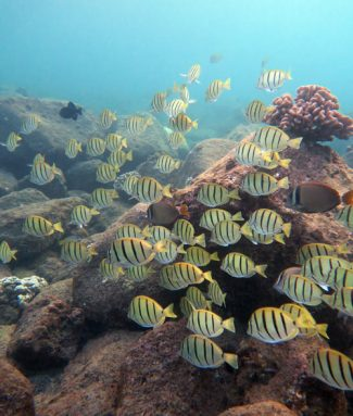 Large mixed school of fish we saw while snorkeling Koloa Landing
