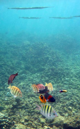 Fish in lots of variety at Lawai Beach