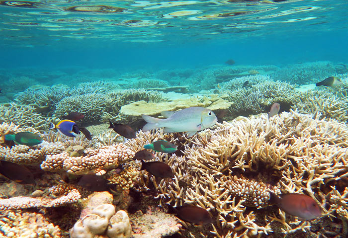 The inner lagoon reef at Vilamendhoo is shallow, especially at low tide.