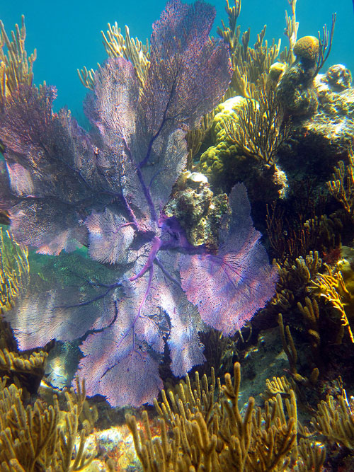 Find The Healthy Coral Reefs On Bermuda
