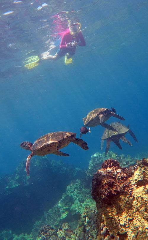 Snorkel with many turtles at Poolenalena Beach.