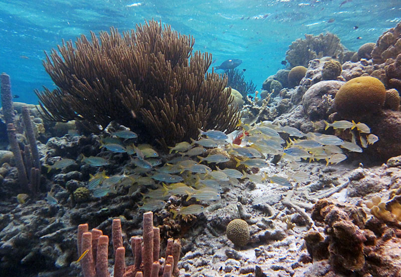 Bonaire Snorkeling - What The Good Spots Still Look Like