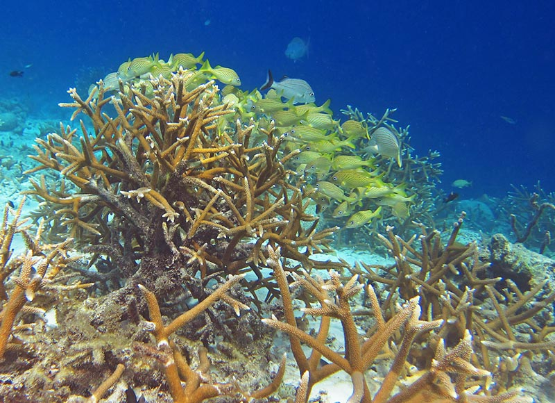 Staghorn Coral & Tropical Fish