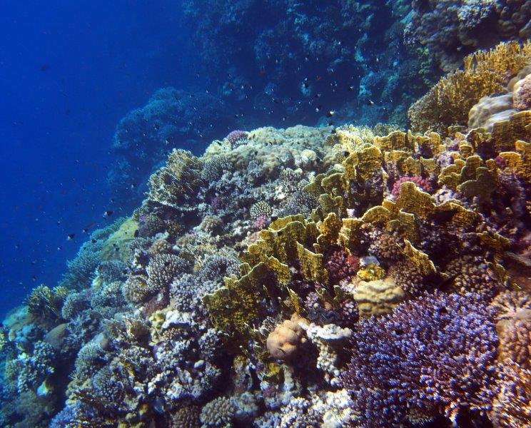 Red Sea Egypt Coral Reef