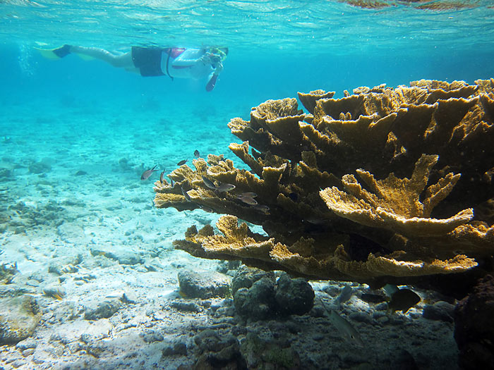 Bonaire Snorkeling With Clear Water And Elkhorn Corals