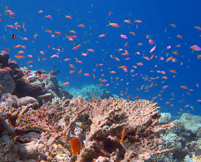 Clouds of fish along the edge of a Maldives reef.