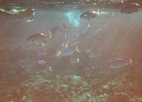 Disposable Snorkel Camera Sample Picture