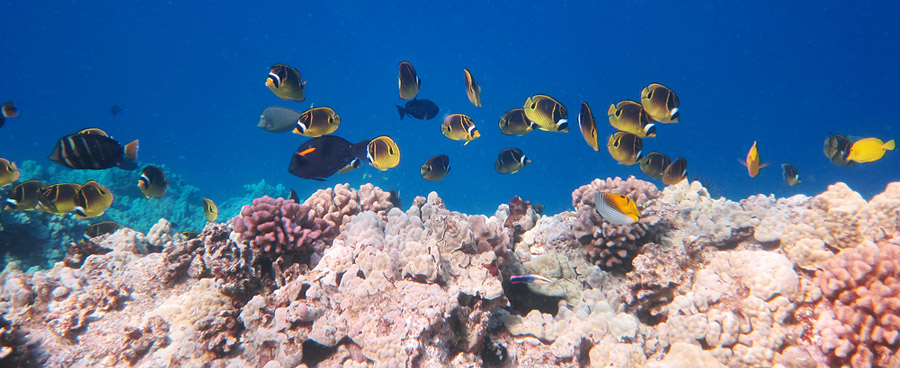 Healthy Reefs To Explore With Many Fish