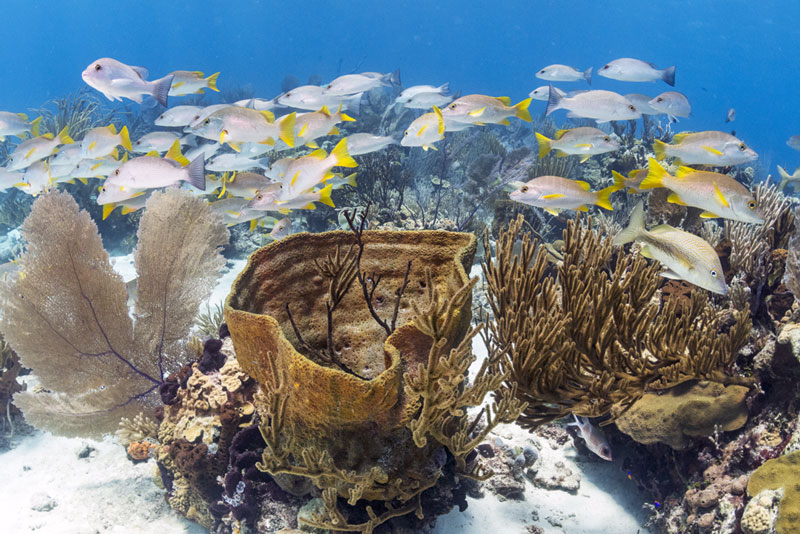 Learn photography and shallow freediving skills in the healthy reefs of the Cayman Islands.
