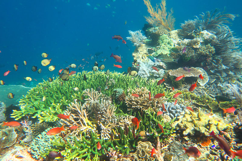 See coral gardens teeming with fish on this Komodo section of the trip.