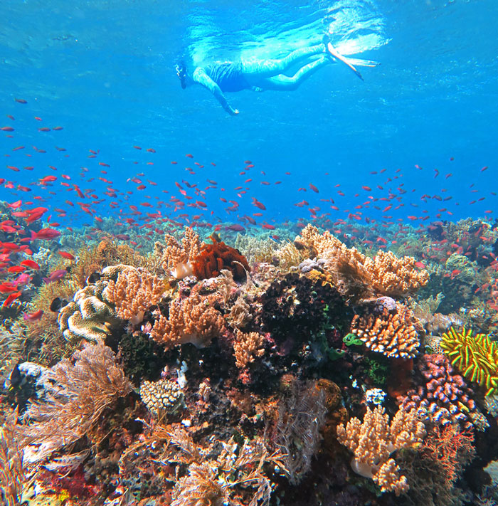 Snorkel colorful healthy reefs on this Alor and Komodo Snorkeling Trip.