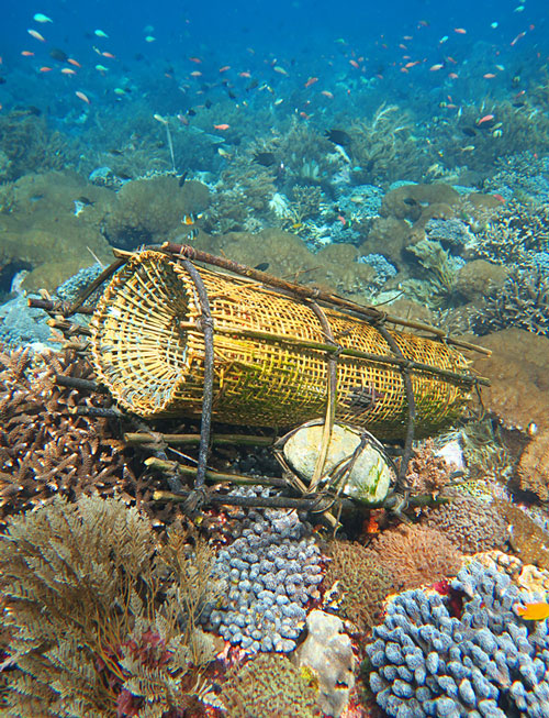 Beautiful handmade fish traps were relatively common, and seemed to have a low impact on fish life.