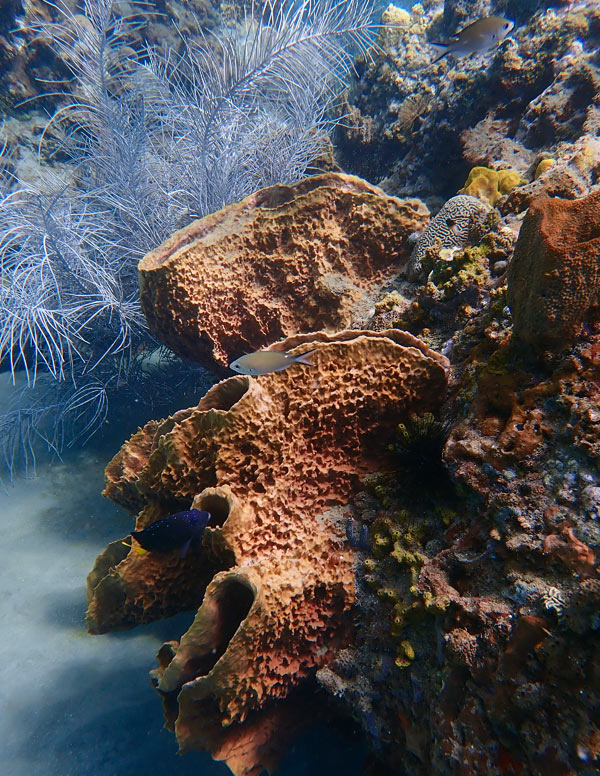 Sponge encrusted boulders and soft corals are a common sight on the reefs of Anse Chastanet.