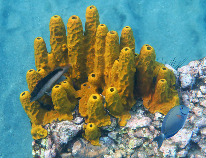 Colorful tube sponge and fishes on Anse Chastanet Reef Zone 1.