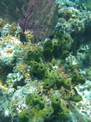 Seafan and sponges
