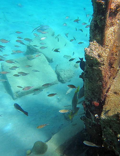 Fish Hanging Around The Old Pier At Bari Reef