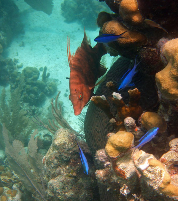 Snorkel some of the best Caribbean reefs on this Belize snorkeling trip to Glovers Reef and Turneffe Atoll.