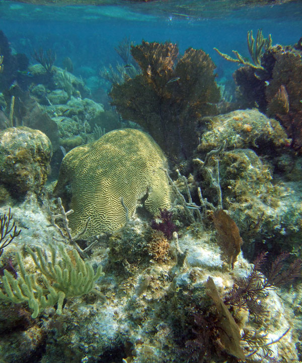 Explore reefs of hard and soft corals on this liveaboard trip to Belize.