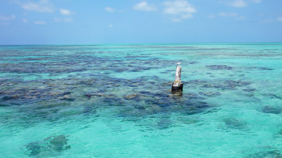Shallow reefs abound in the outer atolls of Belize.