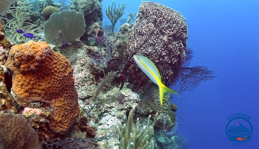 Huge sponges, fish and healthy reefs await you on Glovers Reef and Turneffe Atolls.