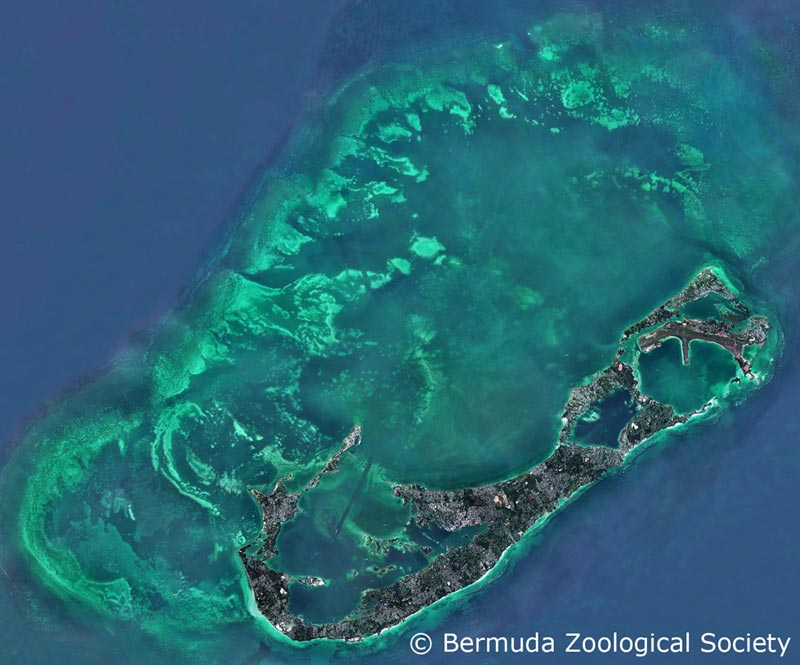 Satellite View Of Bermuda Outer Reefs