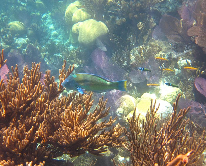 Bermuda Snorkeling Healthy Reef With Fish
