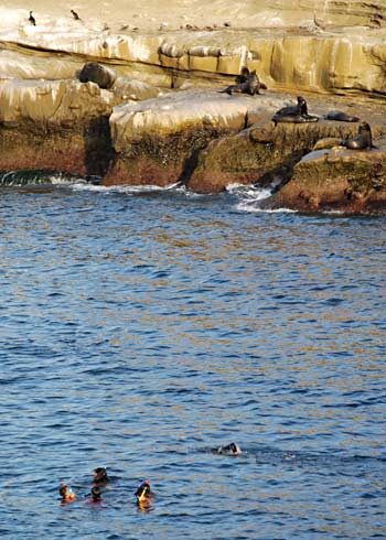 Sea Lions & Snorkelers at La Jolla Cove