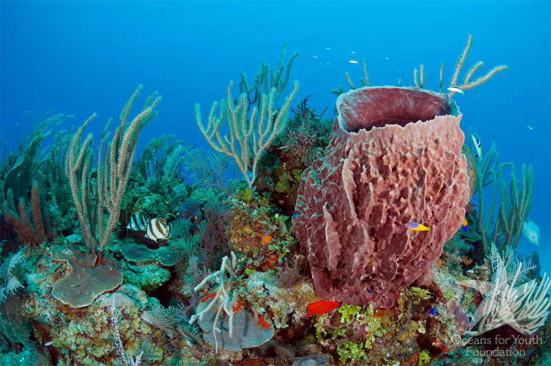 Explore reefs of hard and soft corals and sponges on this liveaboard trip to Cuba.