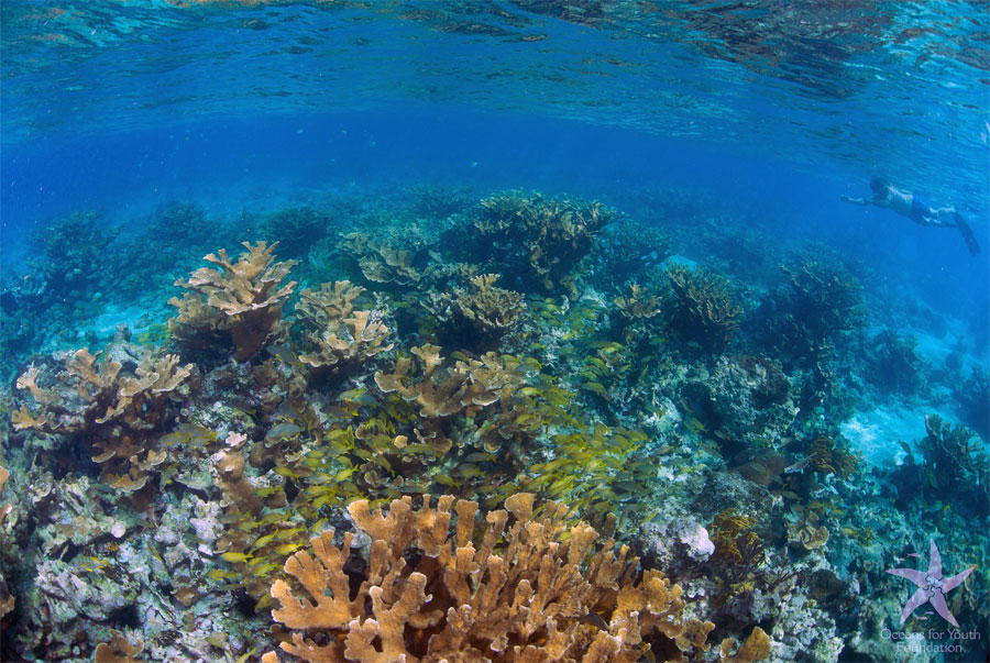 Snorkel some of the best Caribbean reefs on this Cuba snorkeling trip to the Gardens of the Queen National Park.