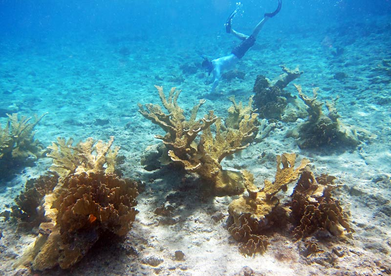 Galen diving in Elkhorn Corals