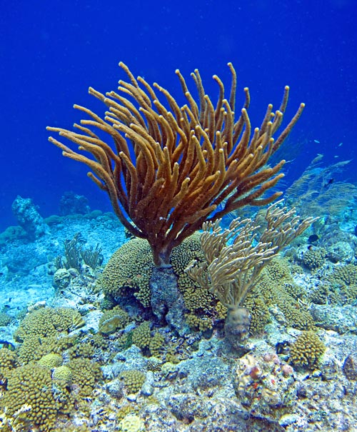 Soft and hard coral on the drop off.