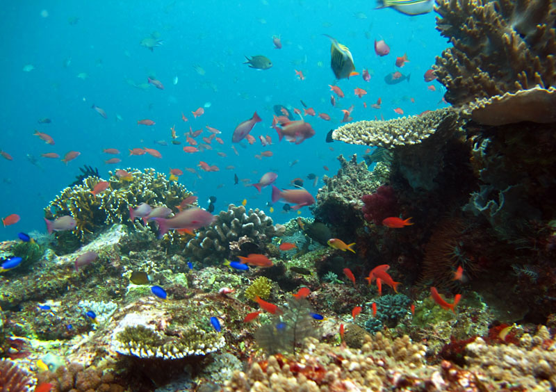 Snorkel lively reefs in northwest Bali.