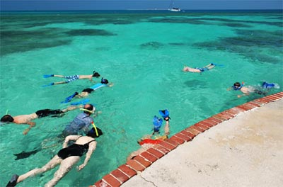 Snorkeling Dry Tortugas Moat Wall