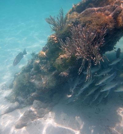 Old pilings are a great habitat for fish and corals at Dry Tortugas